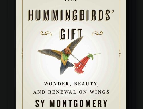 The Hummingbirds' Gift, wonder, beauty & renewal on wings